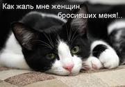 Ваше Счастье - в Наших Руках !  (кошки,  котята)